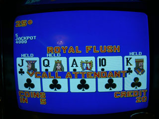Bob's second Royal Flush of the trip, humbled or humiliated by nearby bunnies...